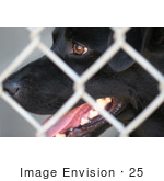 #25 Close-Up Photography Of A Black Dog Behind Chain-Link Fence