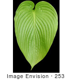 #253 Picture Of A Plant Leaf