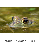 #254 Picture Of A Frog In A Pond