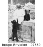 #27889 Historical Stock Photo Of A Chained Bear Cub Sitting On Top Of A Wooden Crate By A Little Girl While Another Cub Stands On Its Hind Legs To Beg For Food