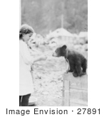 #27891 Historical Stock Photo Of A Chained Bear Cub Sitting On Top Of A Wooden Crate Leaning Out To Take A Donut From A Little Girl