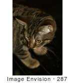 #287 Picture of a Tabby Kitten by Kenny Adams