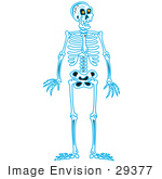 #29377 Royalty-Free Cartoon Clip Art Of A Blue Human Skeleton Standing Upright