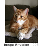 #295 Image of a Curious Orange Cat by Jamie Voetsch