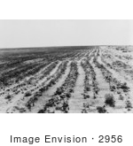 #2956 Agriculture Dust Bowl Texas