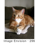 #296 Photo of an Orange Cat With Paws Crossed by Jamie Voetsch