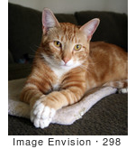#298 Photo of an Orange Cat Sitting With His Paws Crossed by Jamie Voetsch