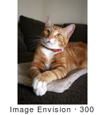 #300 Photo Of An Orange Cat Resting With His Paws Crossed