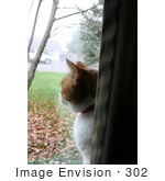 #302 Photo Of A Calico Cat Looking Out Through A Window