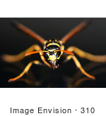 #310 Picture of a Yellow and Black Wasp by Kenny Adams