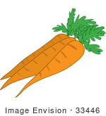 #33446 Clipart Of A Group Of Three Fresh Carrots Cleaned And Ready For Food Prep