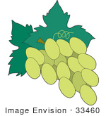#33460 Clipart Of A Green Grape Cluster On The Vine