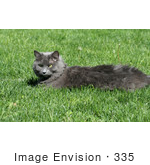 #335 Stock Photo Of A Gray Cat Lying On Grass
