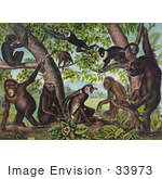 #33973 Stock Illustration Of A Group Of Wild Monkeys Playing In And Under A Jungle Tree