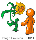 #34311 Clip Art Graphic Of An Orange Guy Character Standing In Front Of His Giant Sunflower In His Garden