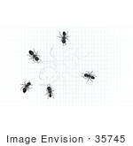#35745 Clip Art Graphic Of Black Sugar Ants On A Drawing Of An Ant On Graph Paper