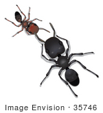#35746 Clip Art Graphic of a Little Brown Sugar Ant Reporting To A Big Black Ant Leader by Jester Arts