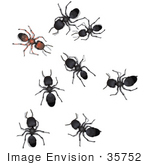 #35752 Clip Art Graphic Of Black Sugar Ants Reporting To A Brown Leader