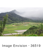 #36519 Stock Photo Of A Scenic View Of Patchwork Fields In Hanalei Valley With Mountains Northern Kauai Hawaii