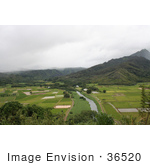 #36520 Stock Photo Of A Scenic View Of Green Hanalei Valley With The Hanalei River Flowing Through It Northern Kauai Hawaii
