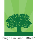 #36737 Clip Art Graphic Of A Silhouetted Adult Maple Tree Over A Background Of Green Bursts