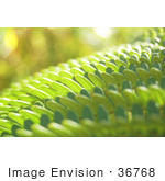 #36768 Stock Photo Of A Closeup Of Sunlight Bouncing Off Of Green Fern Leaves