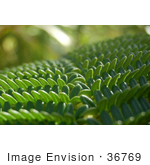 #36769 Stock Photo Of A Closeup Of Branches Of A Green Fern