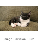 #372 Image of a Sleeping Tuxedo Kitten by Jamie Voetsch