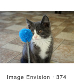 #374 Image of a Gray and White Kitten Playing With a Cat Toy by Jamie Voetsch