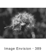 #389 Black and White Image of a Wishy Blow by Jamie Voetsch