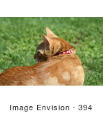 #394 Image of a Curious Orange Cat by Jamie Voetsch