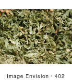 #402 Image of Dried Parsley by Jamie Voetsch