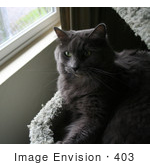 #403 Image Of A Grey Cat Resting In A Cat Tree