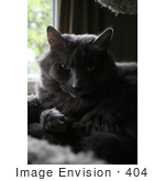 #404 Photograph Of A Gray Cat In A Cat Tree