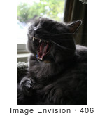 #406 Photo Of A Yawning Gray Cat