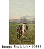 #40663 Stock Photo Of Two Curious Donkeys Staring At The Viewer In A Pasture Colorado