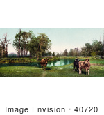 #40720 Stock Photo Of Three Cows Standing In A Green Pasture Near A Pond