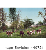 #40721 Stock Photo Of Grazing Cattle In A Grassy Green Pasture