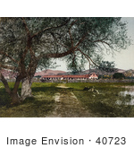 #40723 Stock Photo Of Trees Along The Dirt Road Leading To The Mission San Antonio De Padua California
