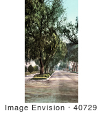 #40729 Stock Photo Of Trees Along Marengo Avenue In Pasadena California