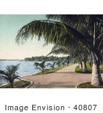 #40807 Stock Photo Of Sidewalks Along The Beach Lined With Palm Trees In Palm Beach Florida