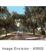 #40809 Stock Photo Of Trees And Sidewalks Along A Dirt Road Marengo Avenue In Pasadena California