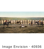 #40936 Stock Photo Of A Farmer And Cowboys Roping A Cow In A Corral On A Colorado Farm