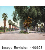 #40953 Stock Photo Of Palm Trees Lining Magnolia Avenue In Riverside California