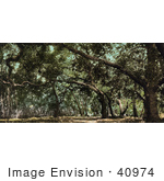 #40974 Stock Photo Of A Canopy Of Trees Over A Road On The Drive In Cooper'S Canyon California