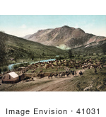 #41031 Stock Photo Of Cowboys Rounding Up Cattle Along The Cimarron River Colorado