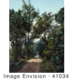 #41034 Stock Photo Of A Dirt Road In The Hammocks At Ormond Beach Florida