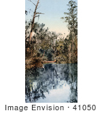 #41050 Stock Photo Of Trees Surrounding Water In A Tributary Of The Saint Johns River In Florida