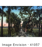 #41057 Stock Photo Of Palm Trees Lining A Road Near Ormond Beach Florida