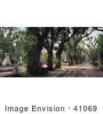 #41069 Stock Photo Of Trees Lining A Road Through The Bonaventure Cemetery In Savannah Georgia